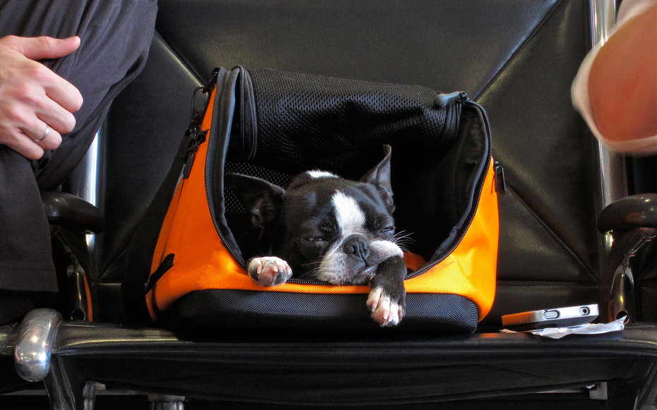 carry-on-pet