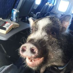 More animals on flights!